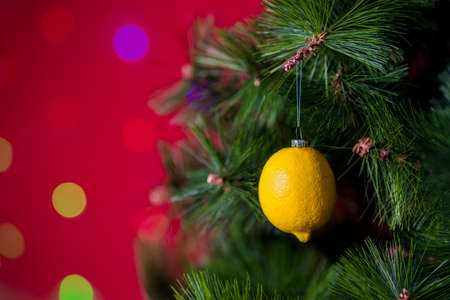 Vegan Christmas concert. Tree is decorated with fresh fruit. raw lemon on a pine branch on a red background with bokeh. The idea of minimalism and eco-friendly celebration without waste. Copy space. Stock Photo