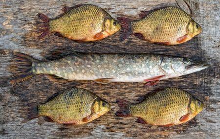 Freshwater fish Stock Photo - 6592092