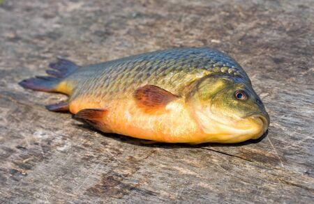 Freshwater fish. Carp Stock Photo - 9342618