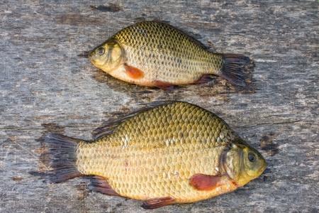 Freshwater fish. Carp photo