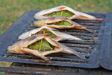 Freshwater fish Stock Photo - 9342576