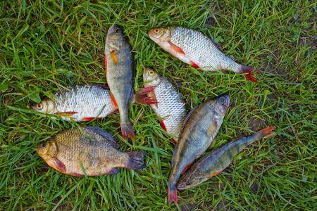 Freshwater fish Stock Photo - 9372408