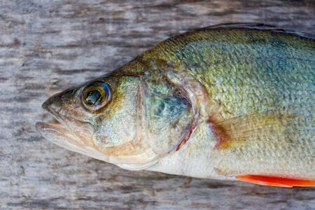 Freshwater fish Stock Photo - 9467694