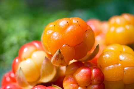 uncultivated: Cloudberry Stock Photo