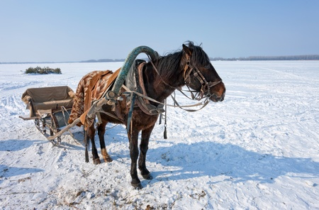 Horse at the bank of frozen river in Russia photo