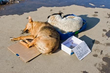 perro asustado: Los perros vagabundos durmiendo en el suelo del texto en ruso en comida para perros Foto de archivo