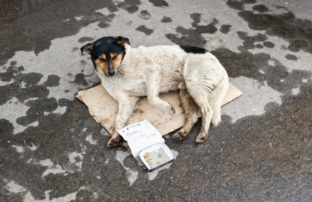 Stray dog resting on the ground  Text in Russian  I badly want to eat Stock Photo - 16878503
