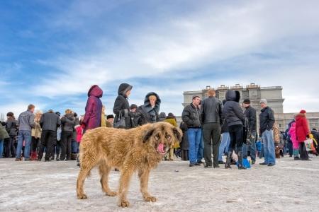 perro asustado: Perro callejero sin hogar entre los habitantes de la ciudad