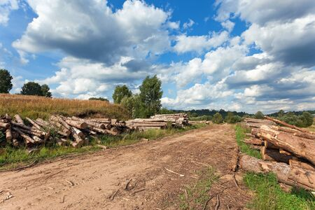 Summer landscape with a country road and felled trees photo