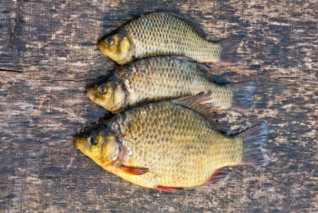 Live freshwater fish carp on a wooden board Stock Photo - 18011506