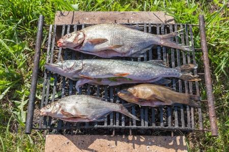 Fresh fish prepared for hot smoking Stock Photo - 20183369