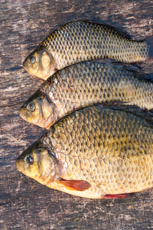 freshwater fish: Raw freshwater fish carp on a wooden board