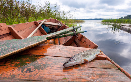 Caught pike lies in a fishing boat on the background of the lake Stock Photo