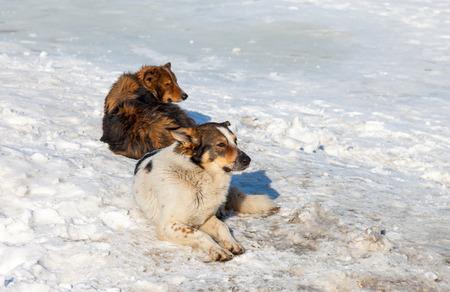 perro asustado: Los perros callejeros que descansan sobre la nieve en d�a de invierno
