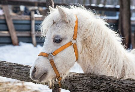 gelding: Head of a beautiful young horse at the farm Stock Photo