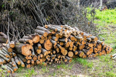 Stock pile of timber, chopped down trees at the forest in summertime. De-forestation