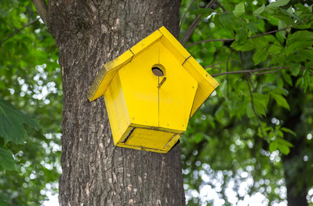 Wooden yellow birdhouse on a high tree in the public park