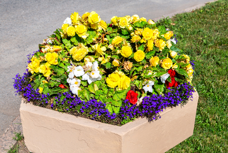 Decorative flowerbed with yellow, blue and white flowers. Colorful flowers decorative composition in sunny day
