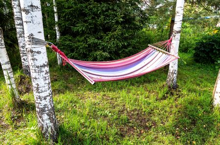 Hammock hanging in the trees in summer sunny day Foto de archivo - 131364011