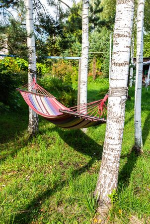 Hammock hanging in the trees in summer sunny day