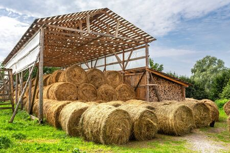 Hay storage with harvested bales of hay for cattle. Agricultural barn canopy with round bales hay in summer