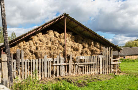 Hay storage with harvested bales of hay for cattle. Agricultural barn canopy with bales hay in summer Imagens
