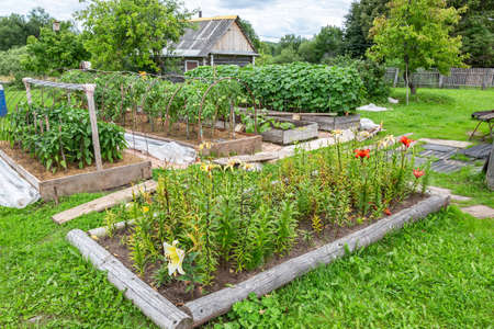 Flowers and vegetables grows at the vegetable garden in summertime