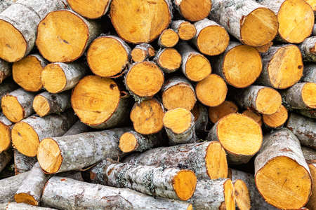 Chopped dry firewood at the countryside. Stock pile of timber, chopped down trees. Preparation of firewood for the winter