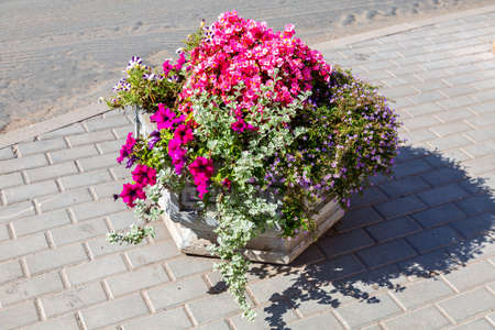 Decorative flowers at the city street in summer sunny day, urban floristry