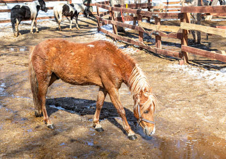 Beautiful horses at the farm in sunny spring day