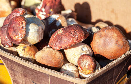 Fresh porcini mushrooms (boletus edulis) in the boxes at the local farmers market Standard-Bild