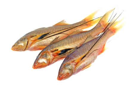 spat: Baby Salmon Threadfins - Polydactylus macrochir