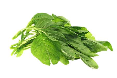Green Amaranth Vegetables Stock Photo - 8414843