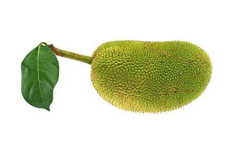 Jackfruit - Artocarpus heterophyllus