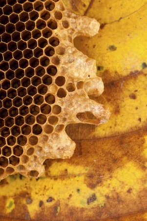 Honey Bee Hive photo
