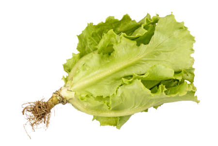 asian produce: Chinese Lettuce