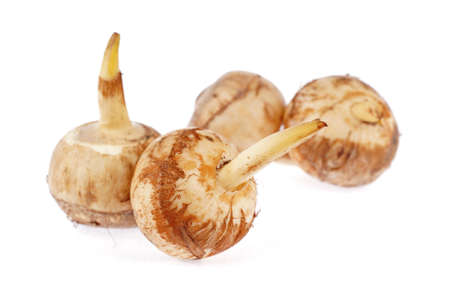 starchy food: Bermuda Arrowroot Bulbs Stock Photo