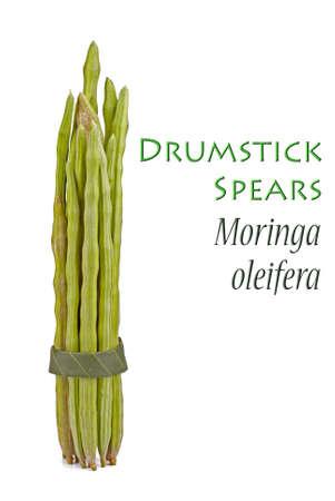 oleifera: Drumstick Plant known as Moringa oleifera Stock Photo