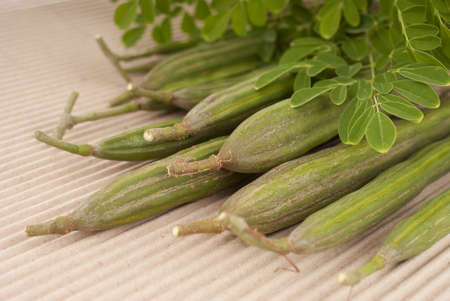 oleifera: Drumstick Plant - Moringa oleifera