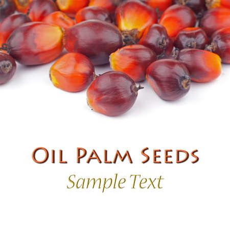 red palm oil: La palma da olio semi