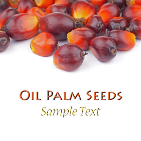 red palm oil: Oil palm Seeds