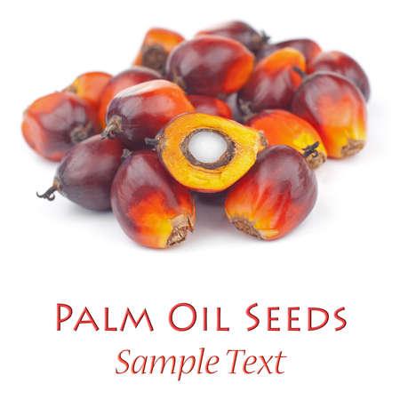red palm oil: Olio di palma Seeds Archivio Fotografico