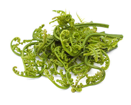 fresh leaf: Edible Bracken - Pucuk Paku; Popular edible ferns in Asia but contains mild levels of alkaloids