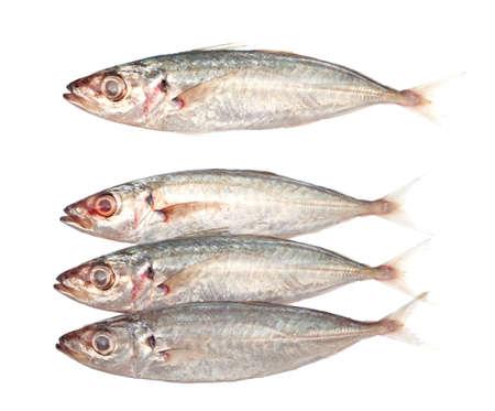 sardinas: Sardinas India Foto de archivo