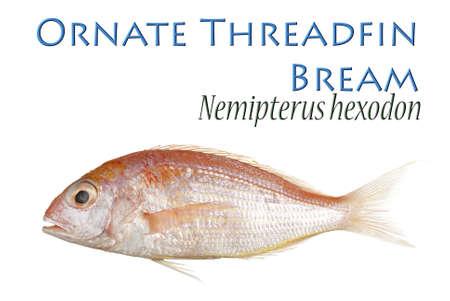 Ornate Threadfin Bream Stock Photo