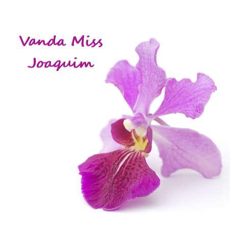 Vanda Miss Joaquim, Singapores National Flower; unsharpened file Stock Photo