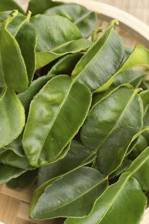 lobed: Kaffir Lime Leaves or Daun Limau Purut; Non sharpened file Stock Photo