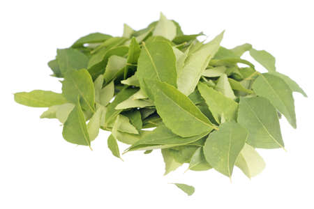 sharpen: Fresh Curry Leaves Non sharpen file Stock Photo