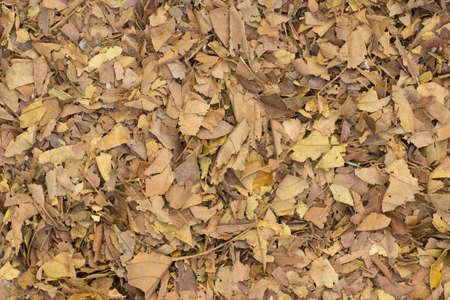 mulch: Broken Leaf Mulch Non sharpen