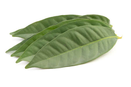 salam: Daun Salam known as the Indonesian Bay Leaf; non sharpened file
